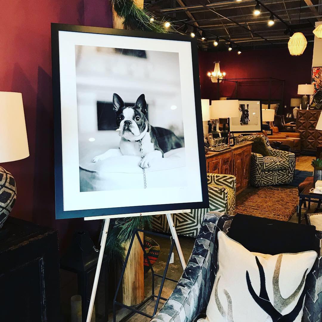 Fine Art Dog Photography in Santa Fe Home