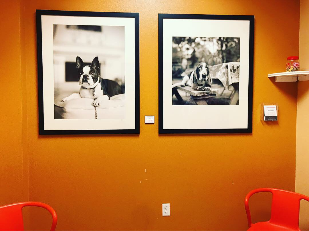 Dog Photography in Santa Fe Animal Shelter by Jesse Freidin Photographer