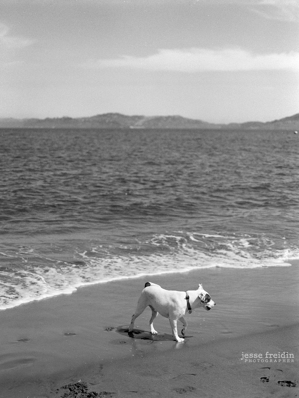San Francisco Dog Photography