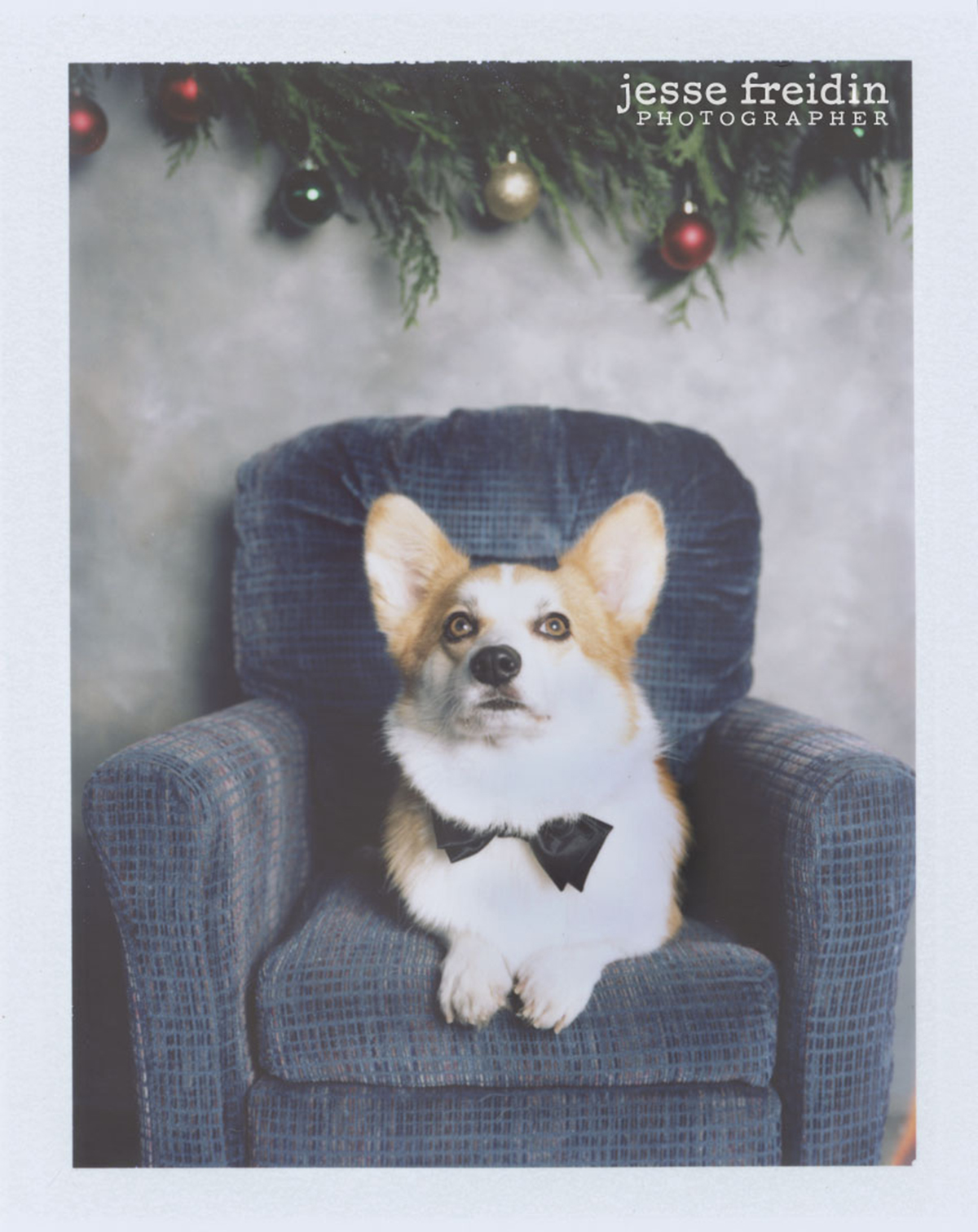 Santa Fe Dog Photobooth