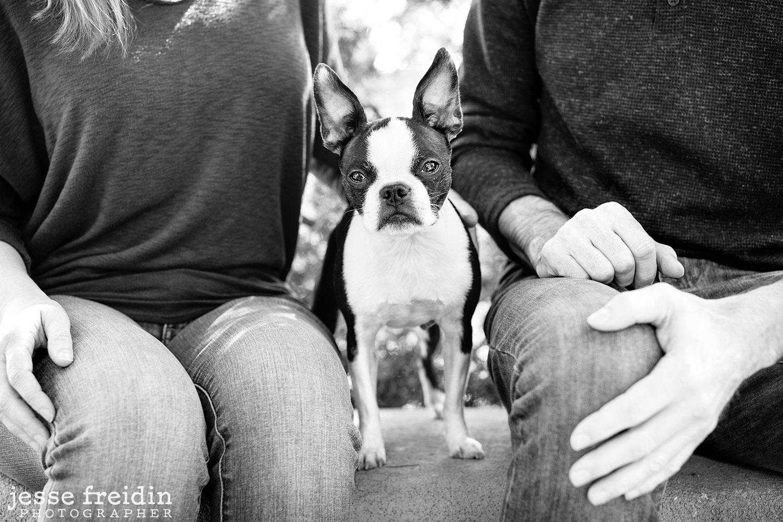 Santa Fe Dog Photographer Jesse Freidin