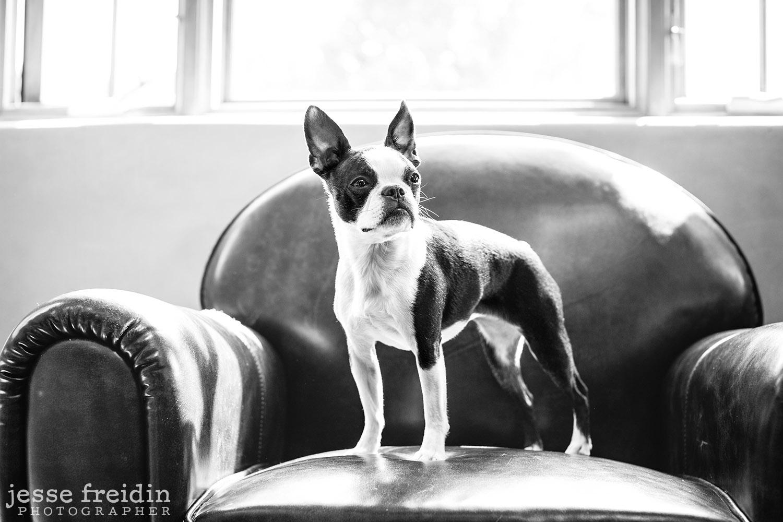 SouthWest Pet Photography