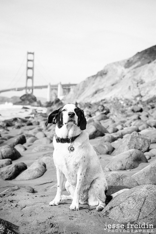 San Francisco Dog Photography at Golden Gate Bridge