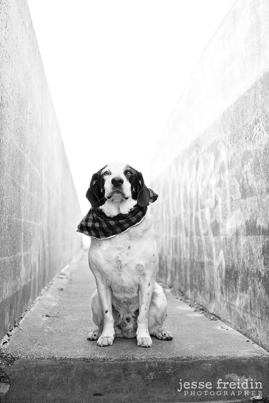 San Francisco's Best Dog Photographer