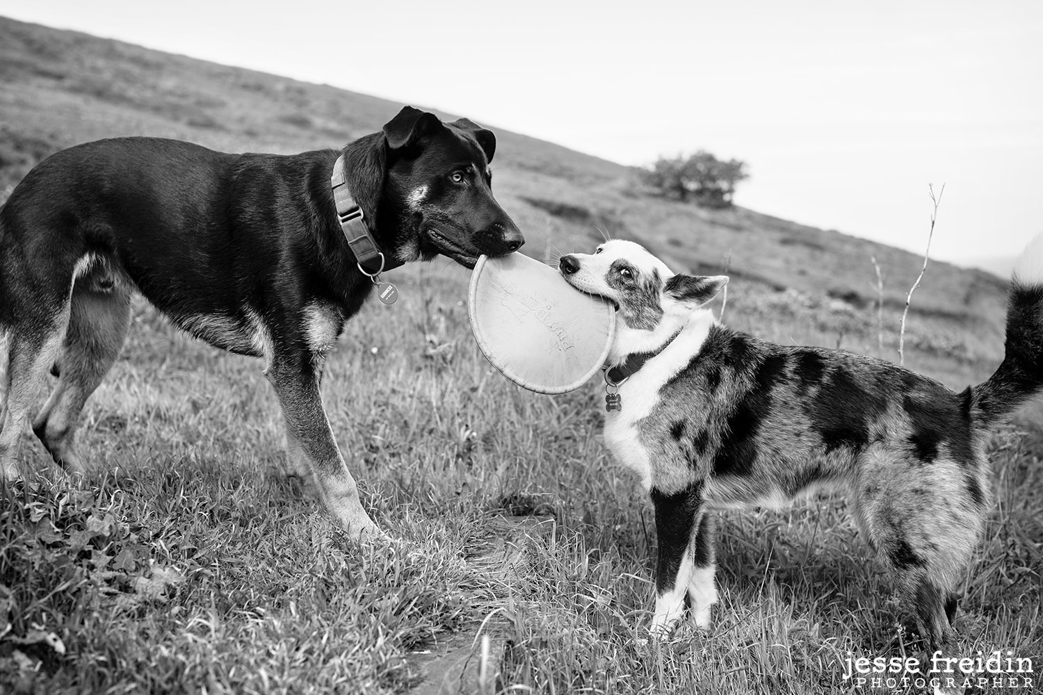 Black and White Pet Photography San Francisco