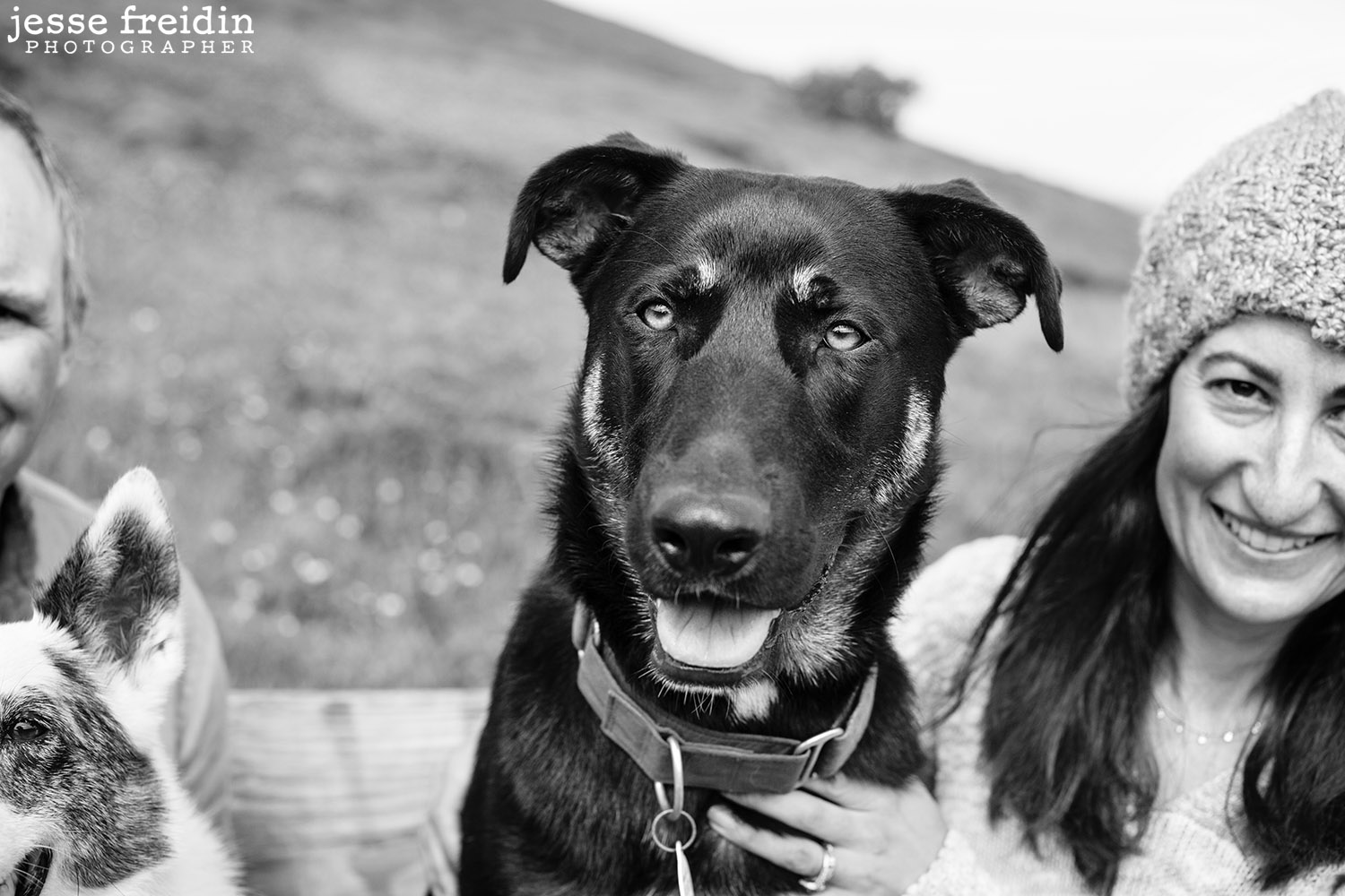 Artistic Dog Photography in San Francisco