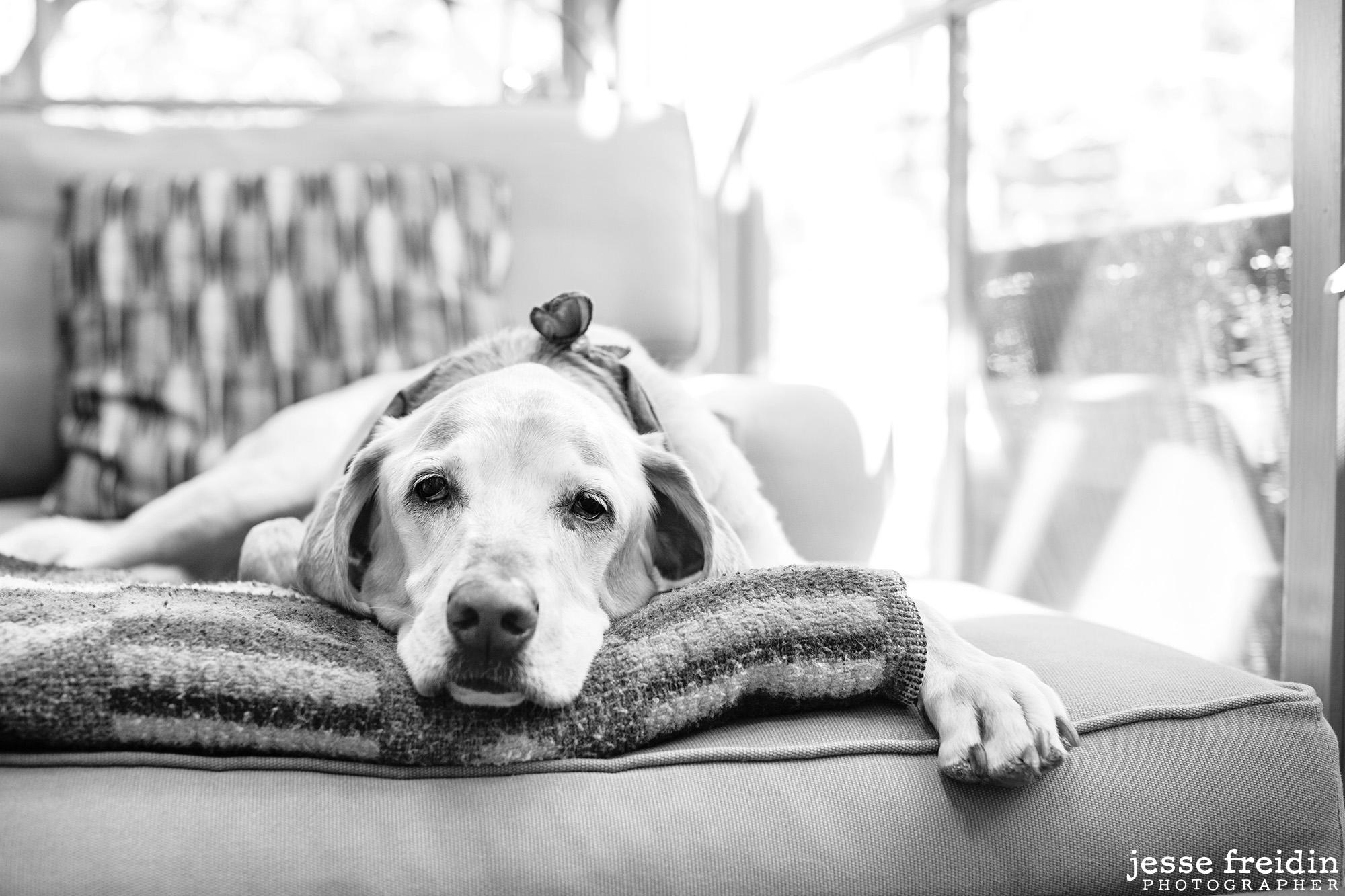 Santa-Fe-Dog-Photography