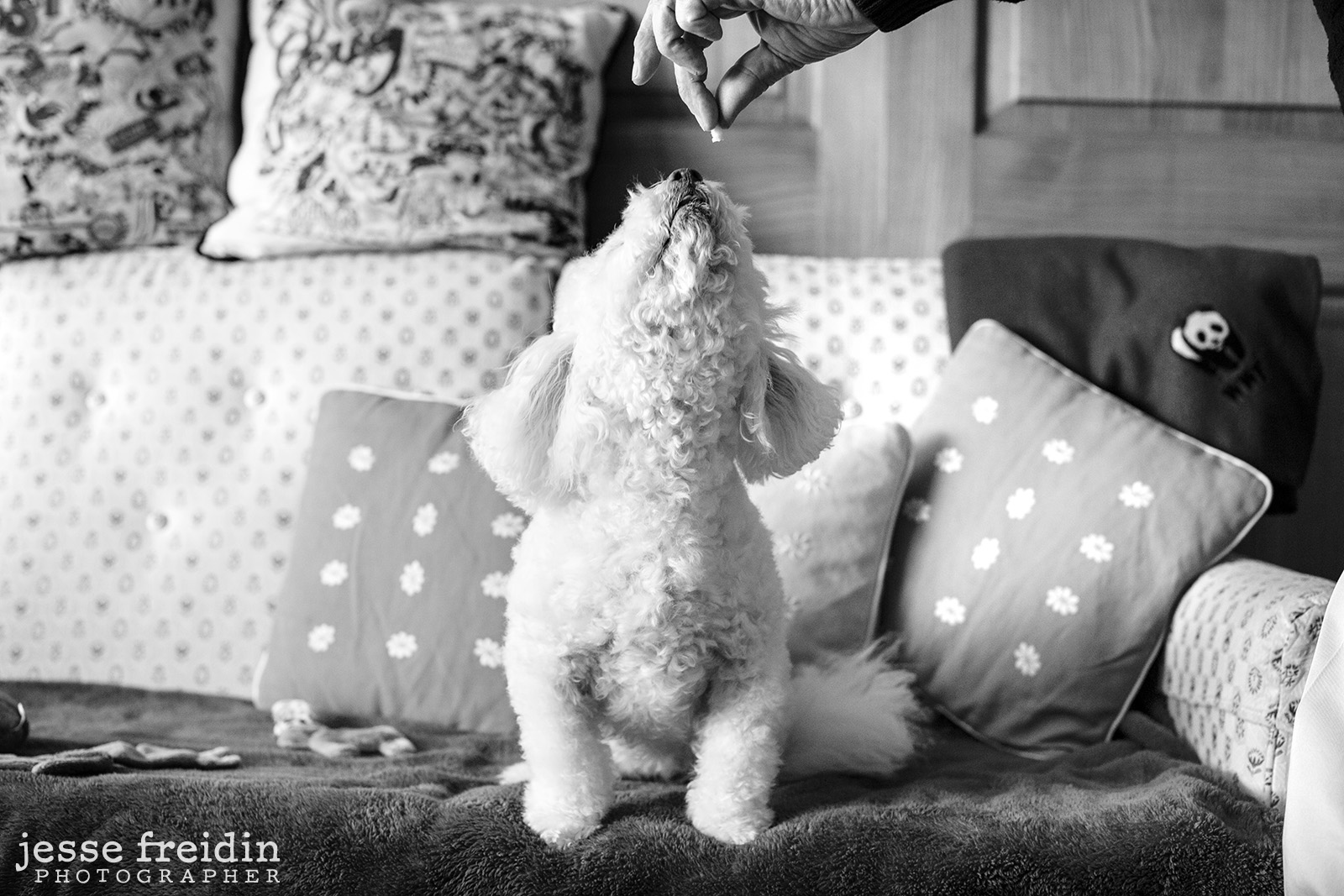black-white-pet-photography