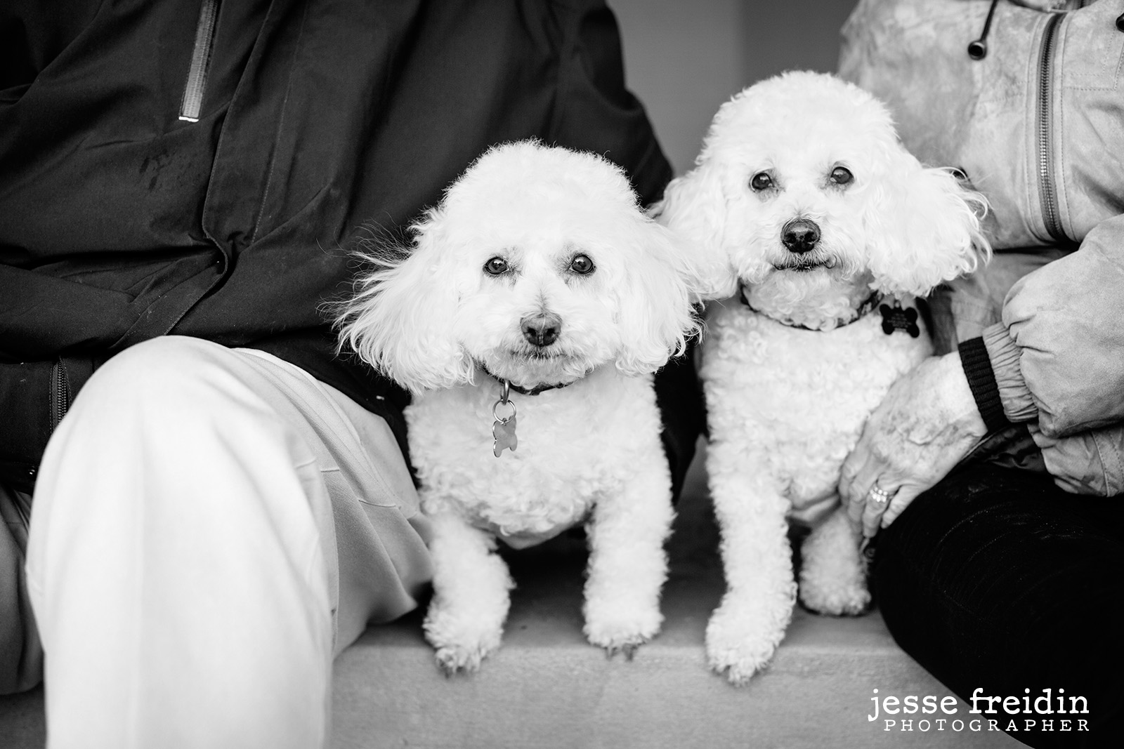 Santa-Fe-Dog-Photography-black-and-white