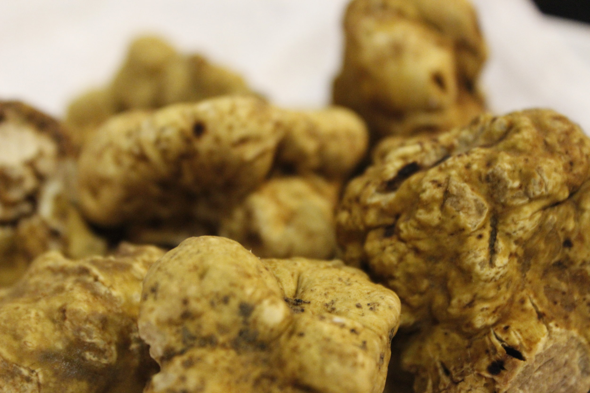 picture of white truffles