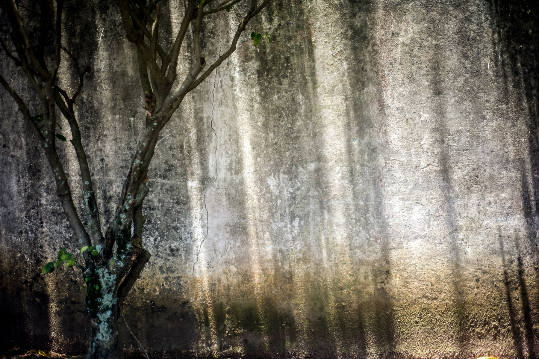 patricia-vanrespaille-photographer-life-through-my-lens-033.jpg