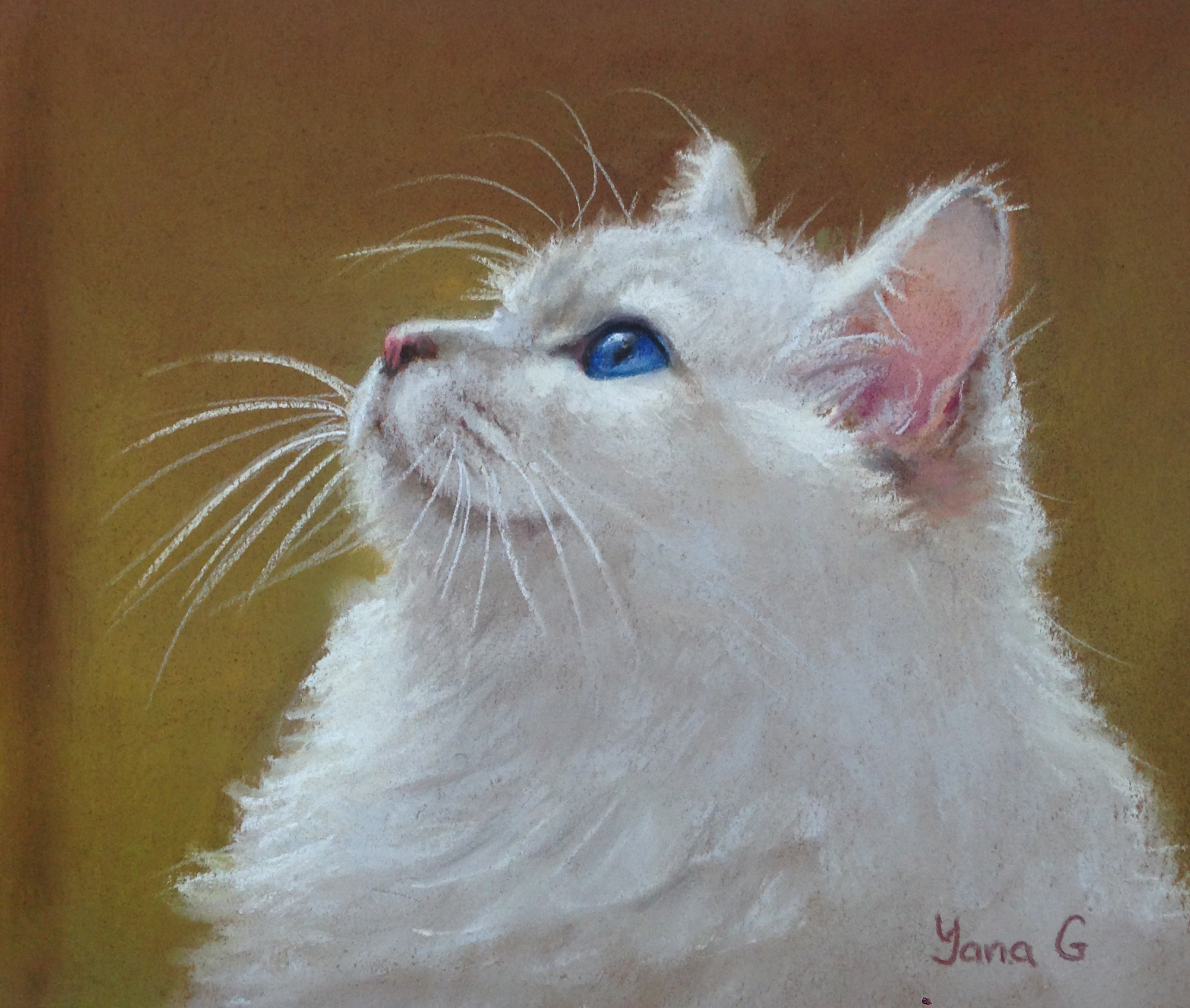 Curios Cat 8x9 Pastel
