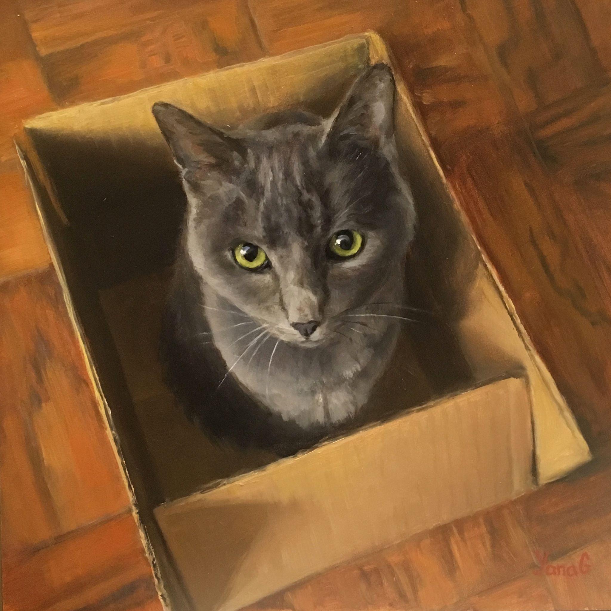 Cat in The Box 8x8 Oil on board