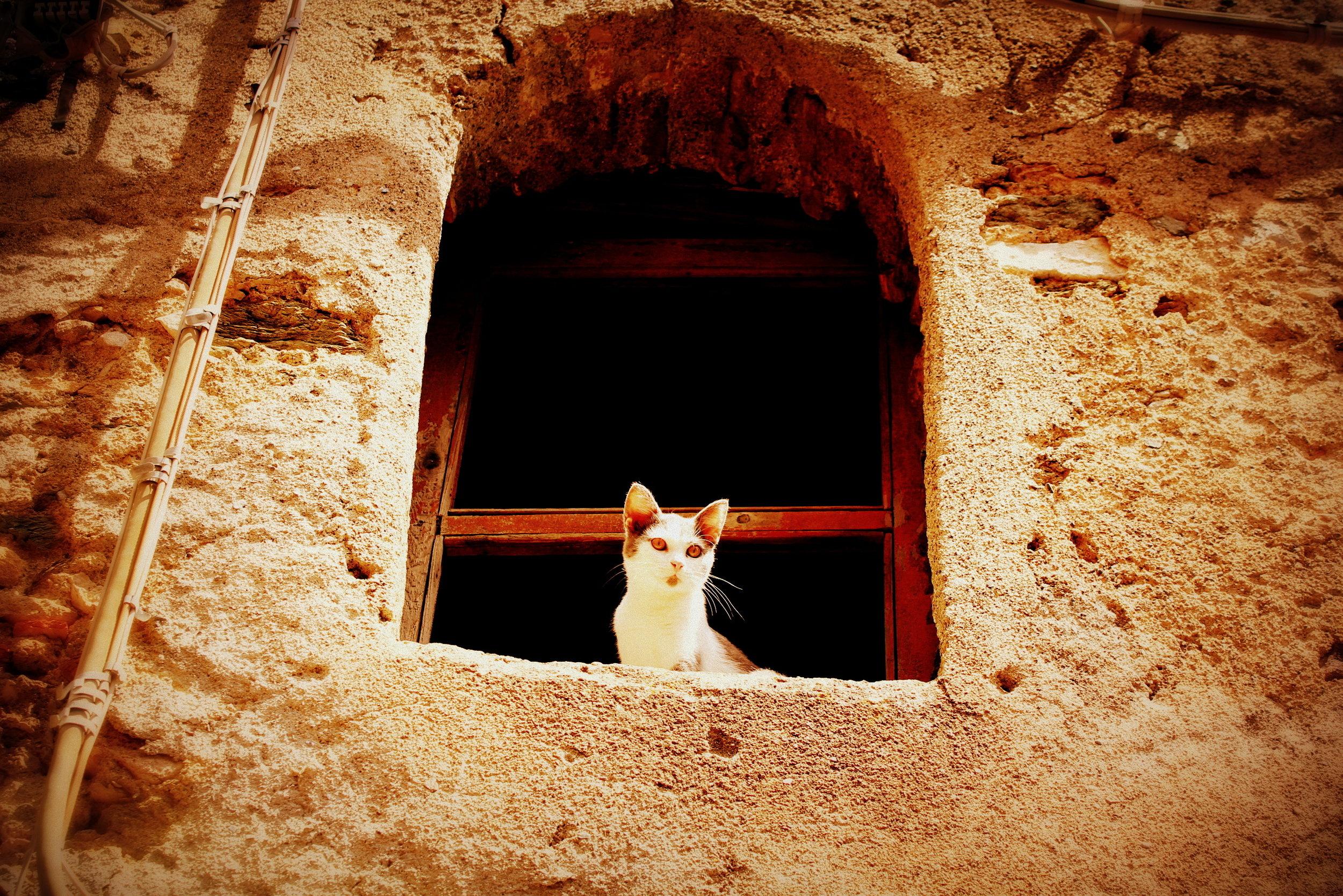 A cat in Scaletta Zanclea