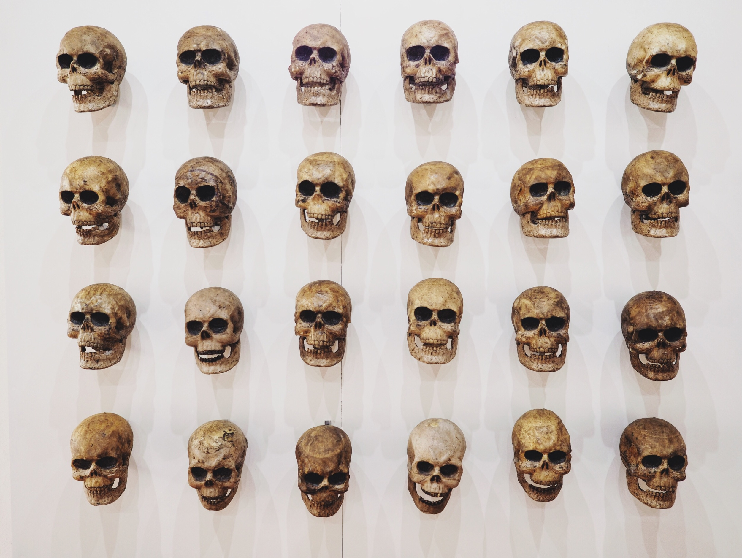 A display of fabricated skulls in the museum