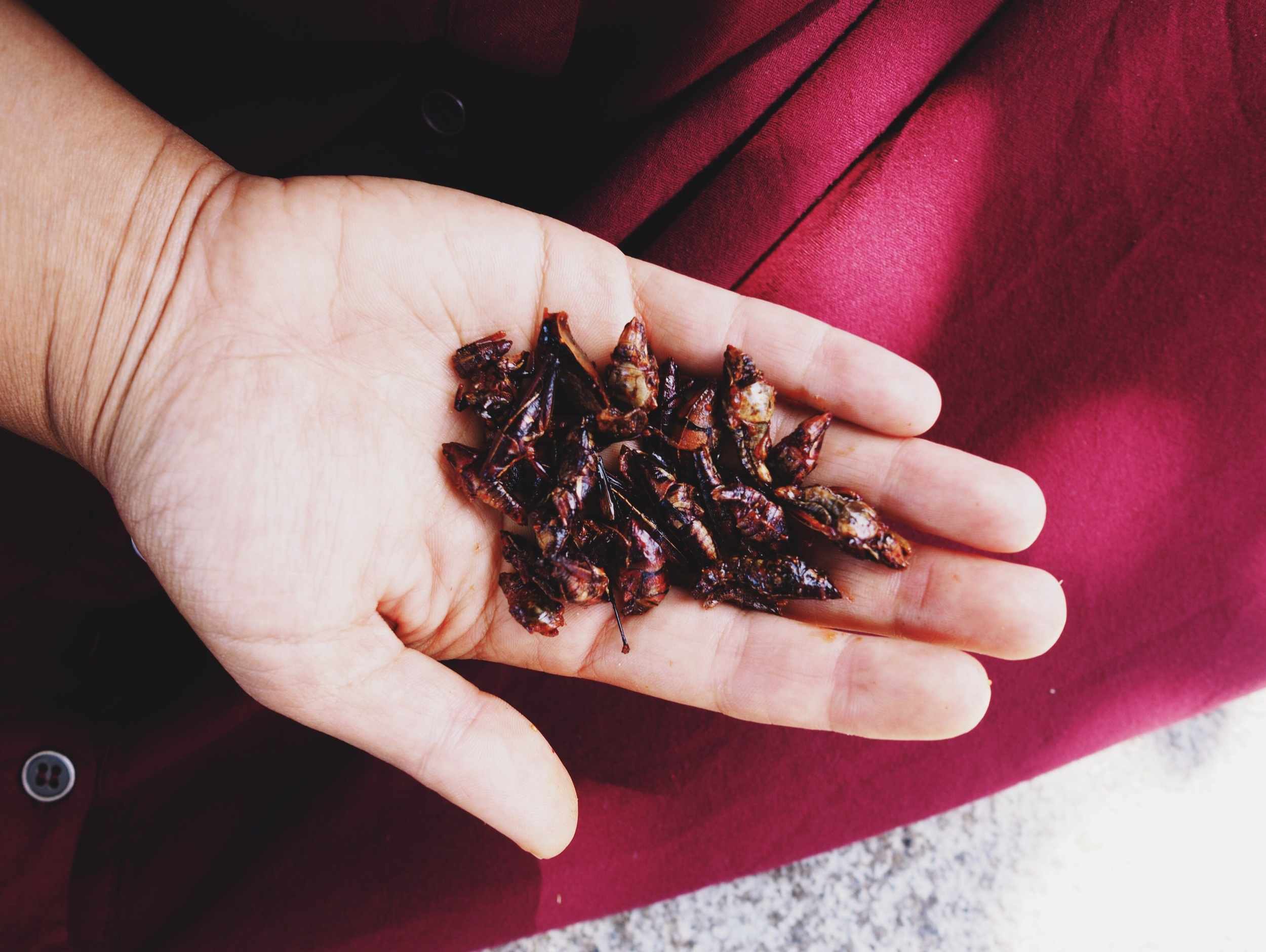 Chapulines – fried grasshoppers with chile and lime