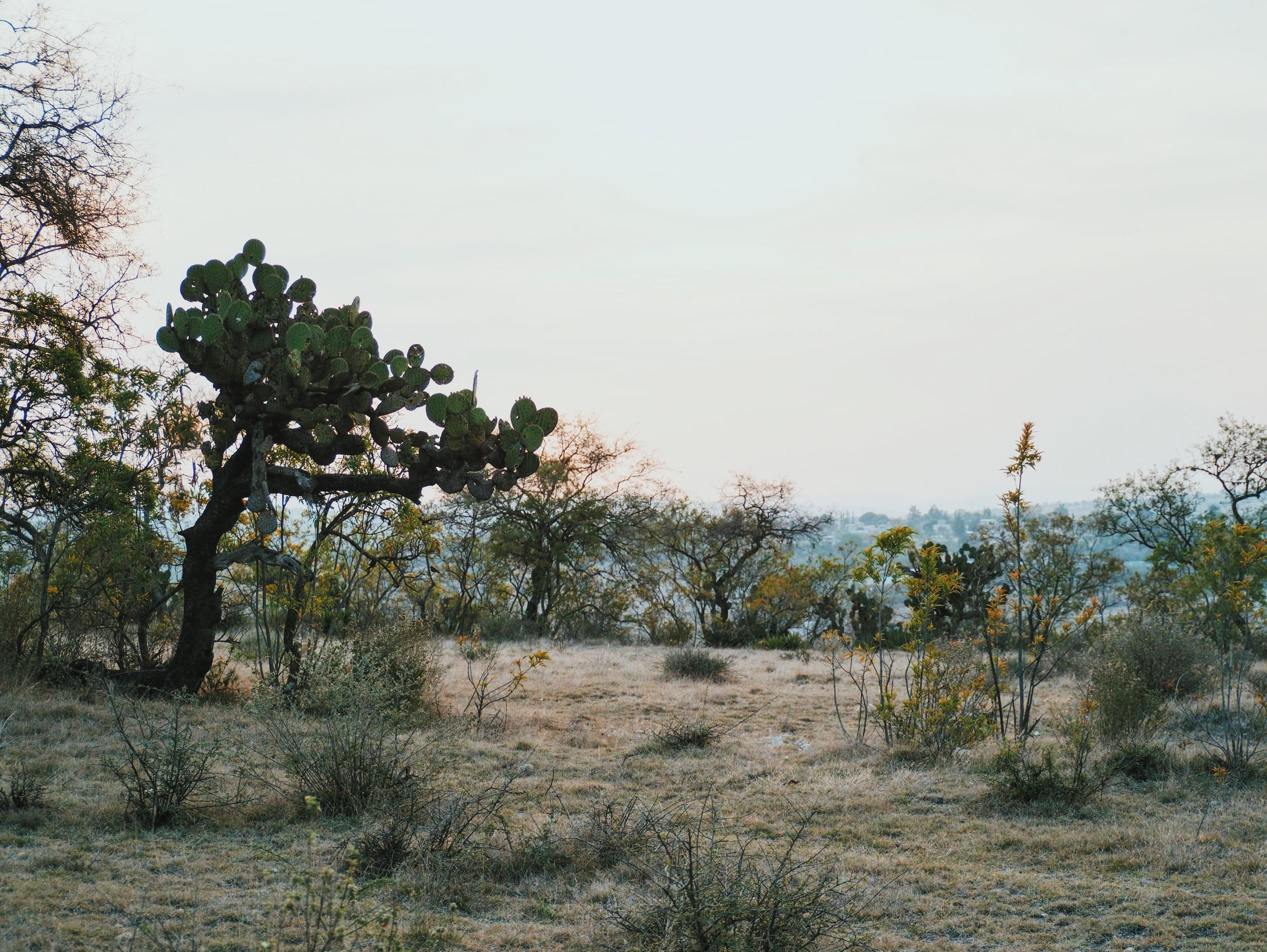 Sunset outside Puebla