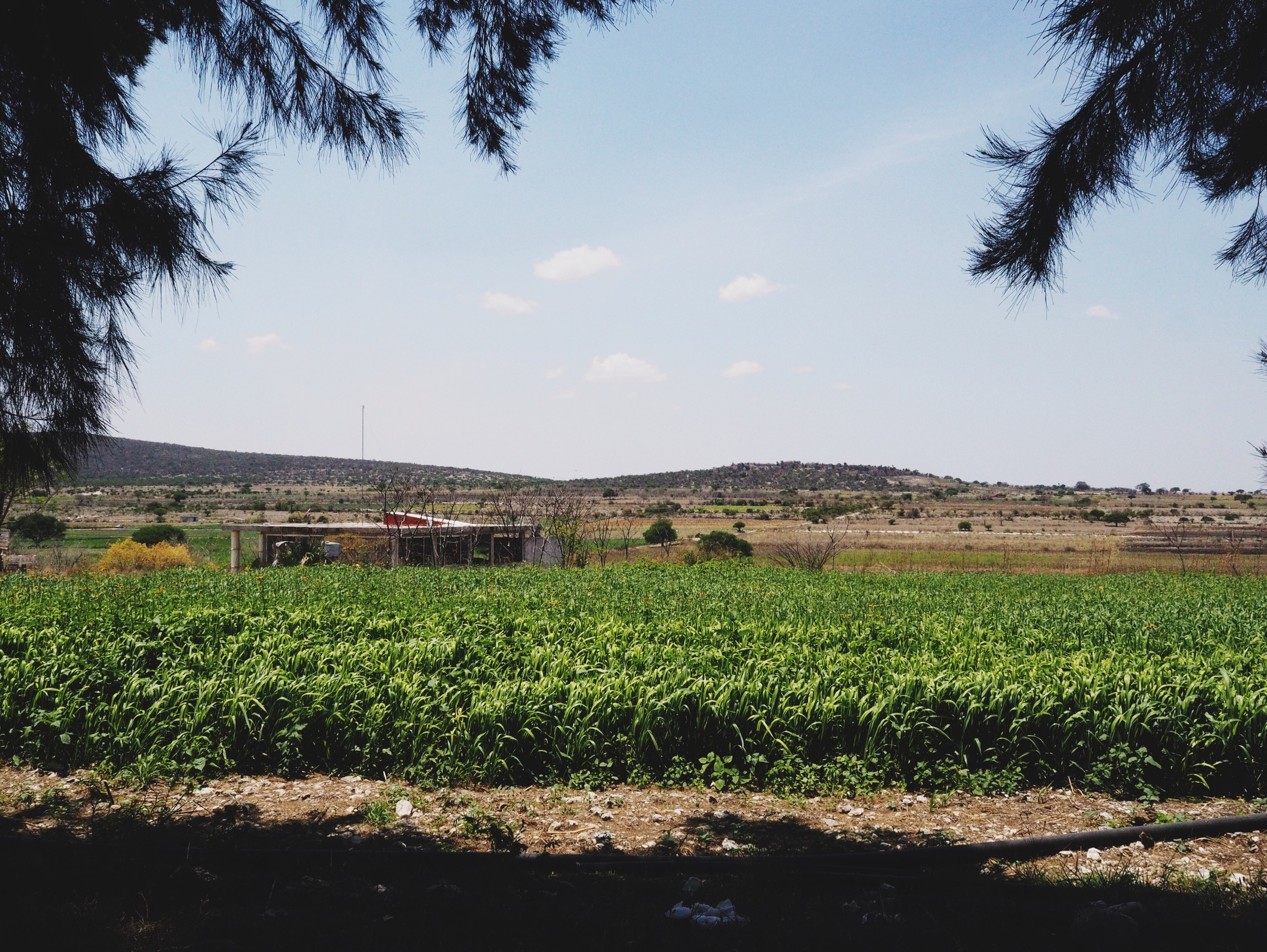 Lots of big agriculture in the area