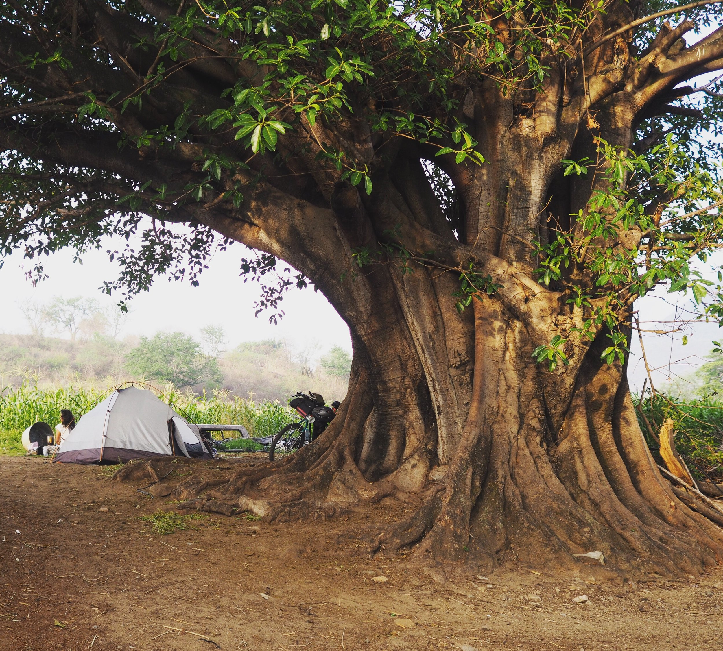 Camping under an amate tree