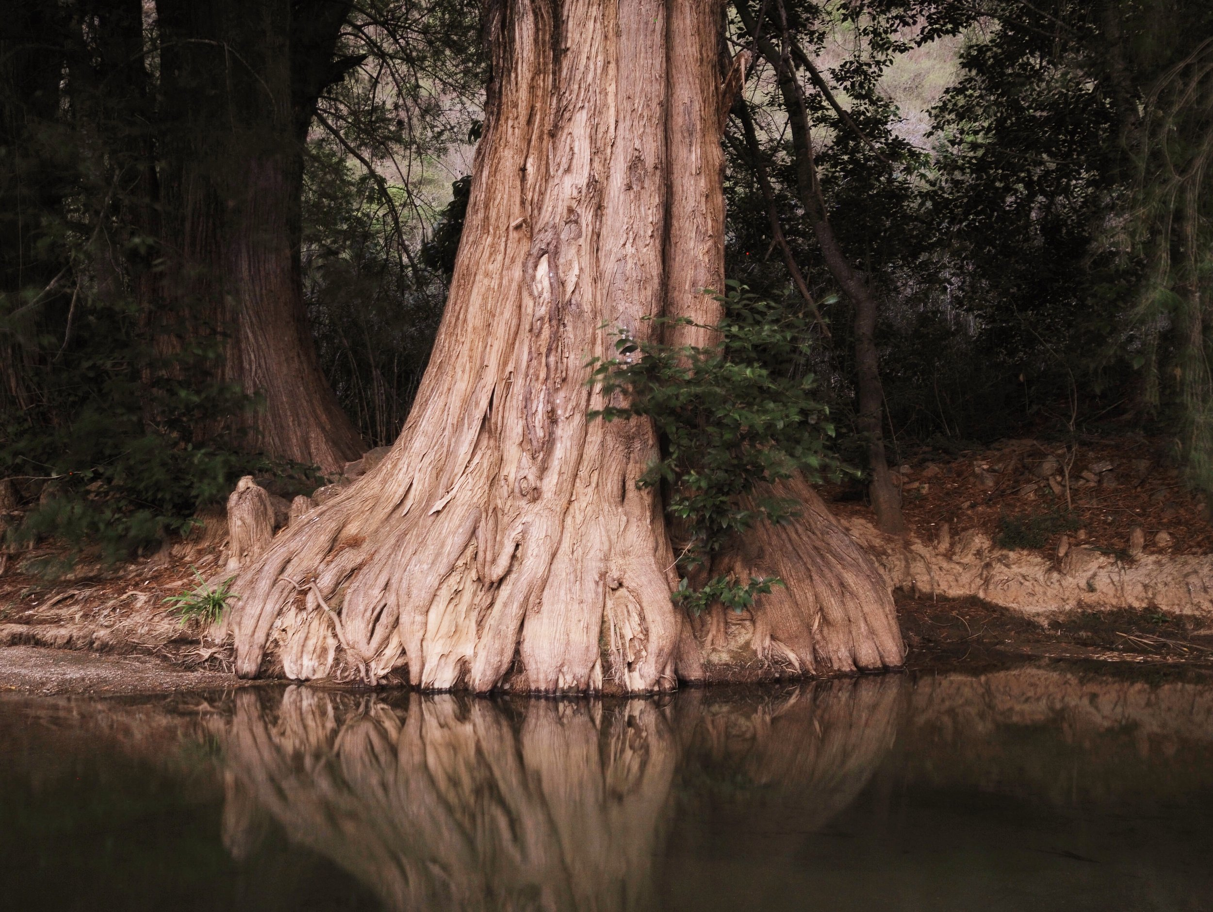 The cypress trees provided shade as we enjoyed the refreshing river water