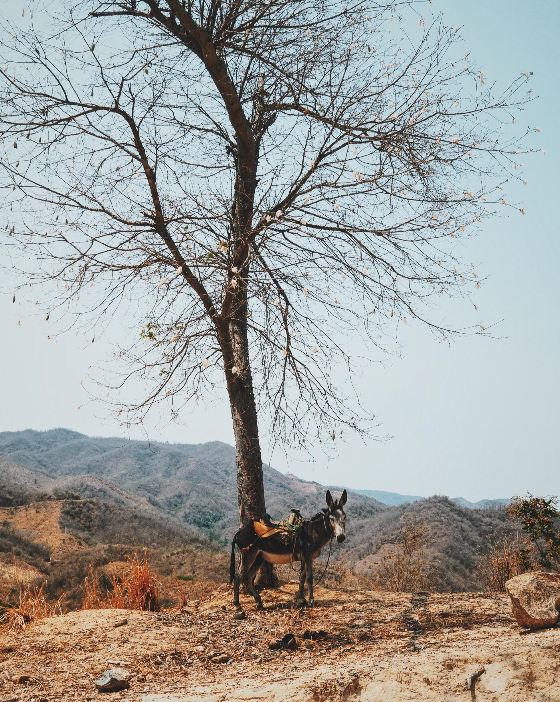 Scenes from rural Oaxaca