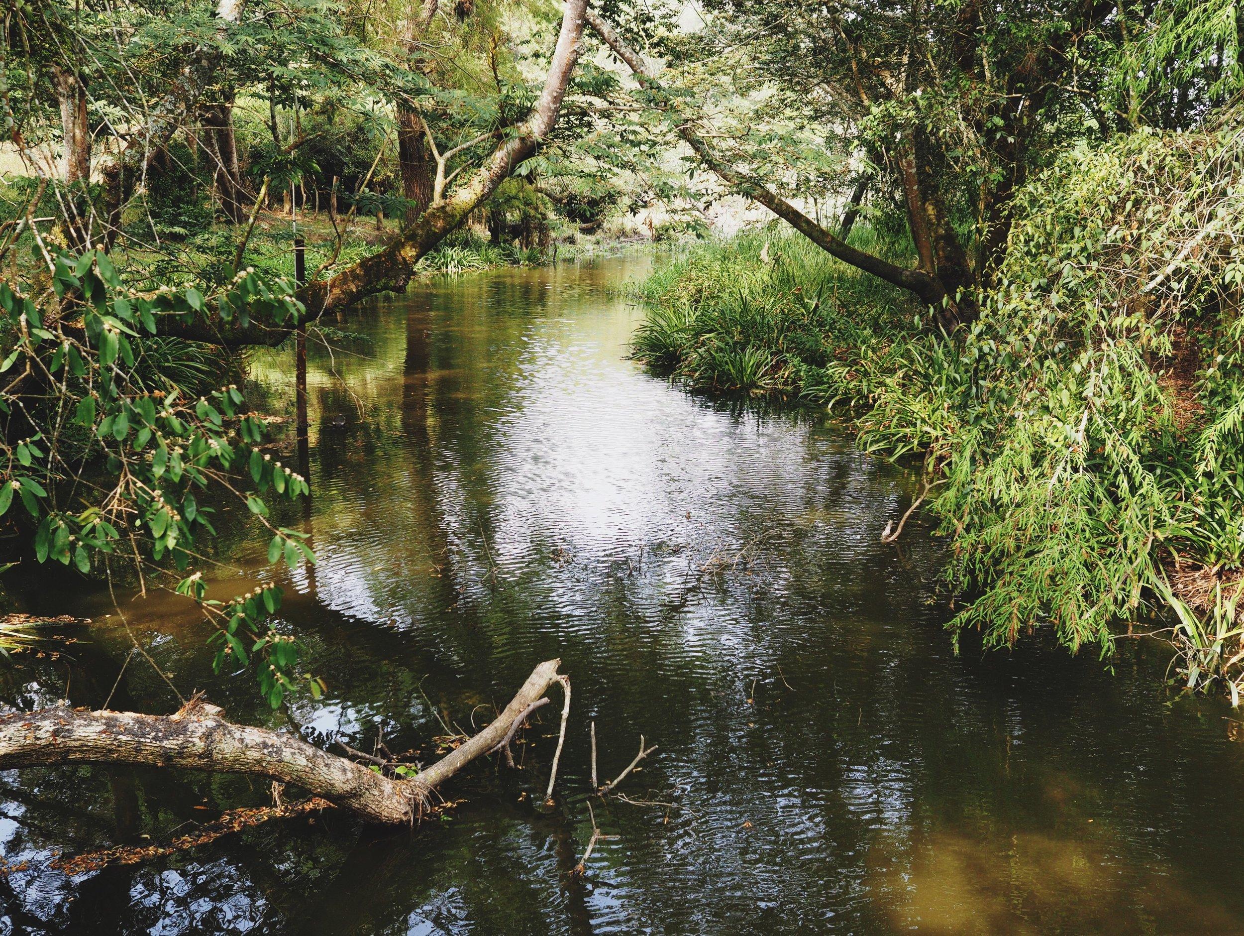 River running through the park