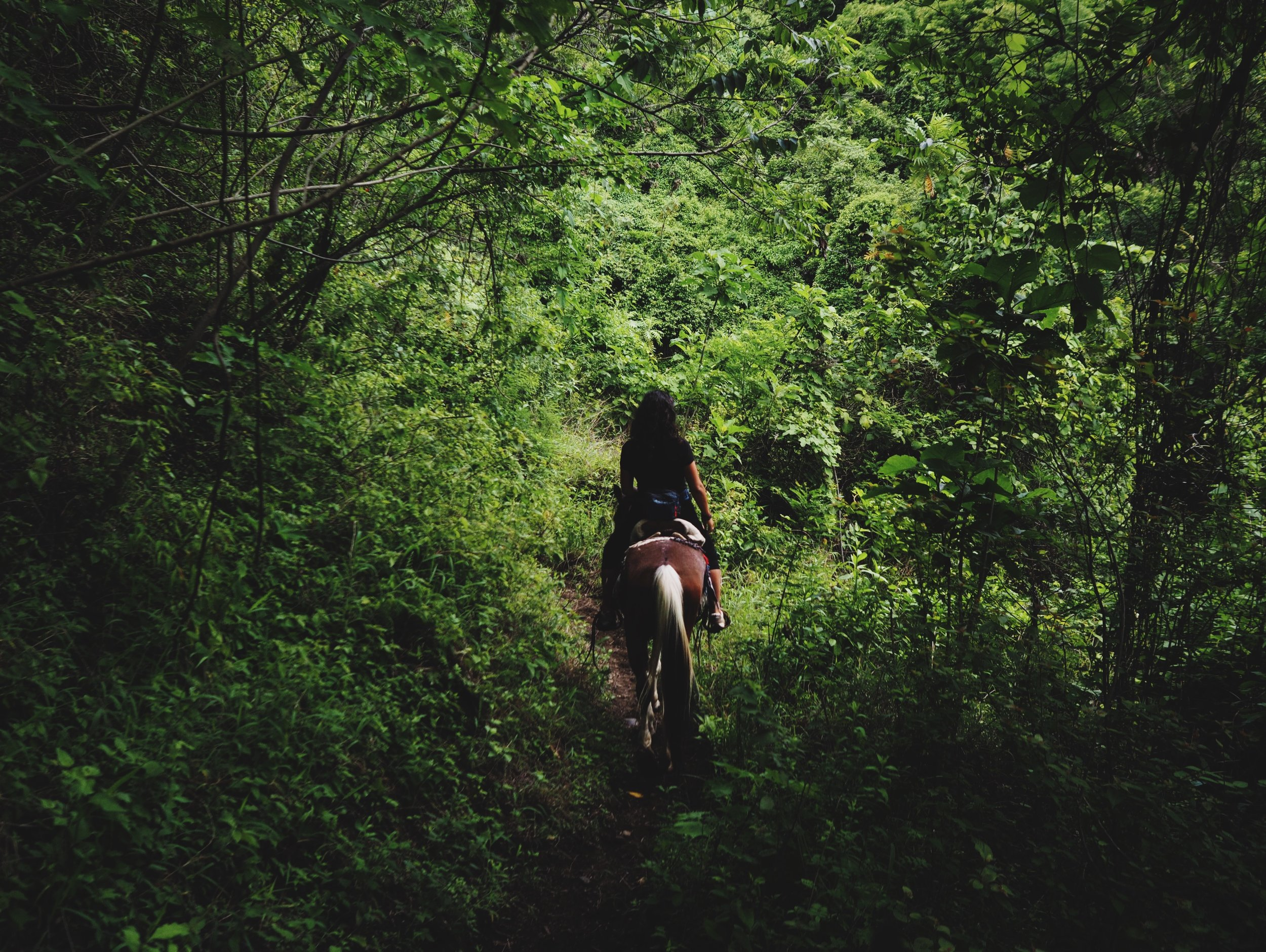 Horseback riding in the Mayan jungle has now been checked off our bucket lists