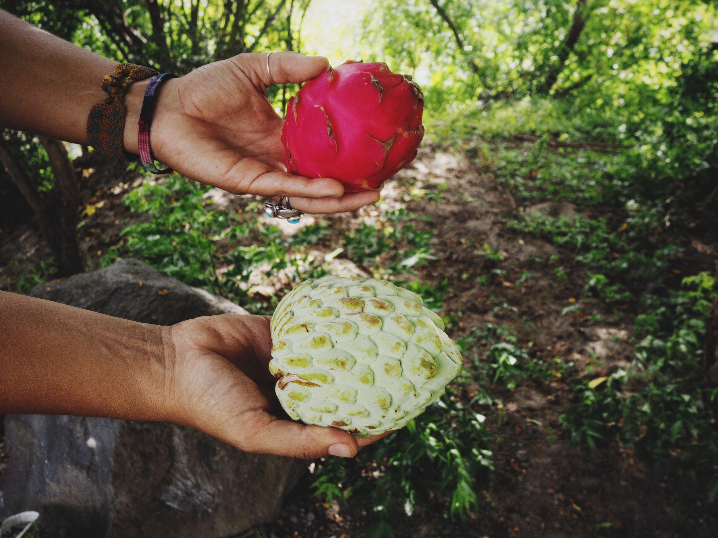 Strange fruit on Ometepe - yum!