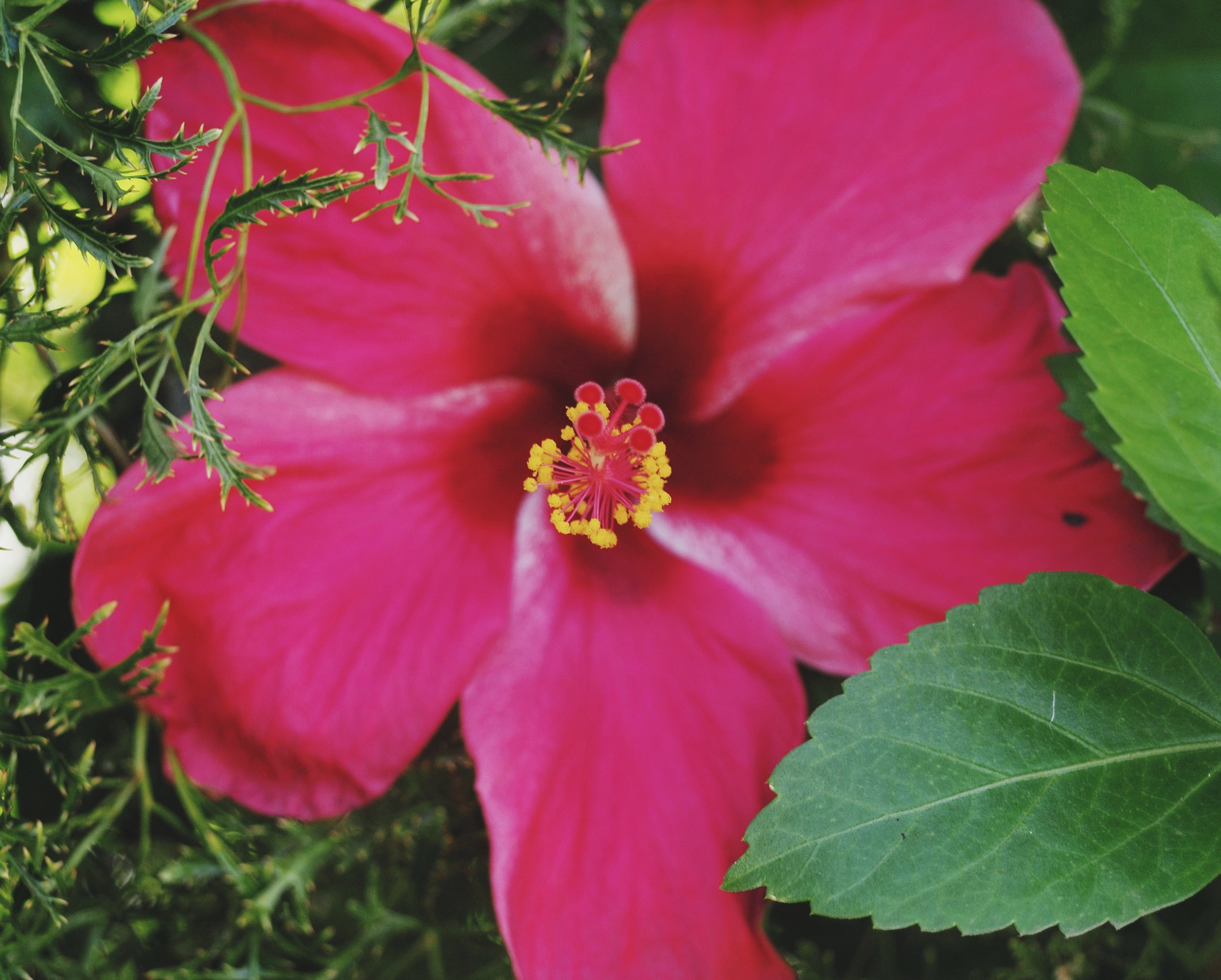Nicaragua was covered in gorgeous flowers!