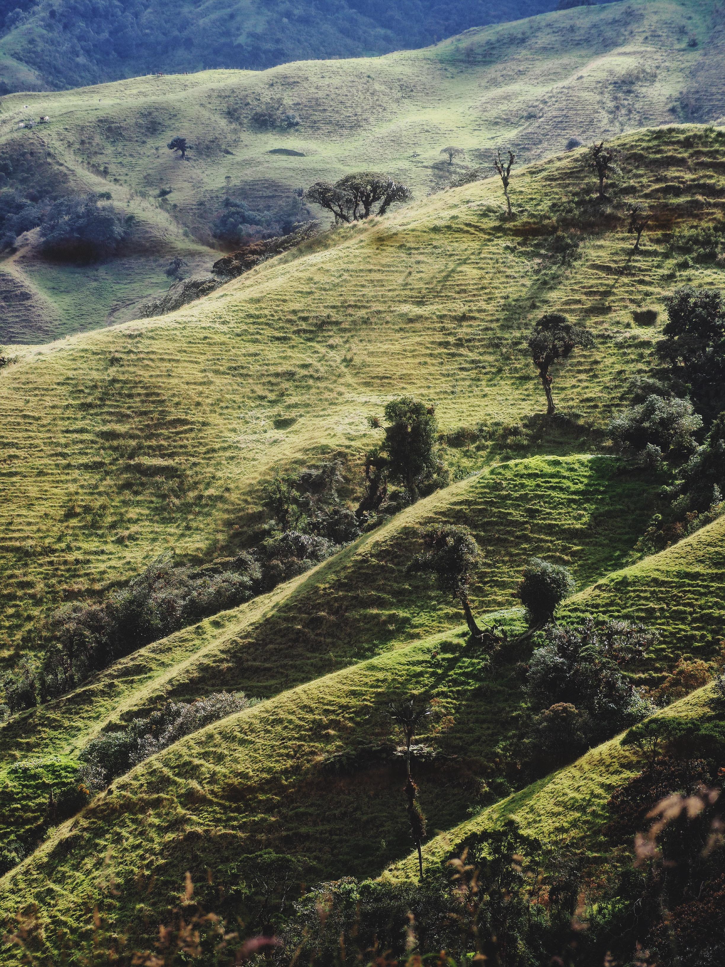 Deforested hillside for ranching