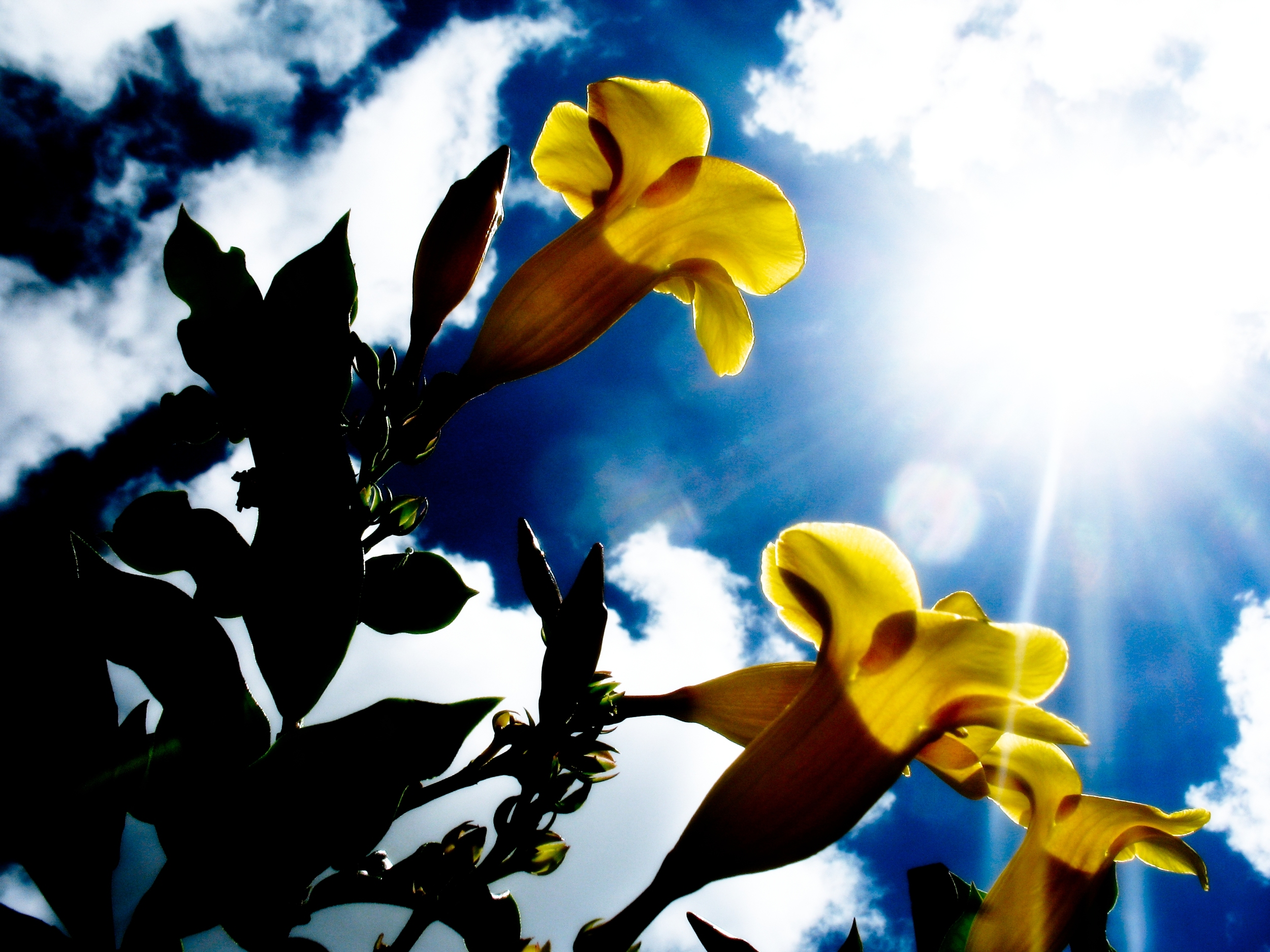 yellow-sunshine-daffodils.jpg