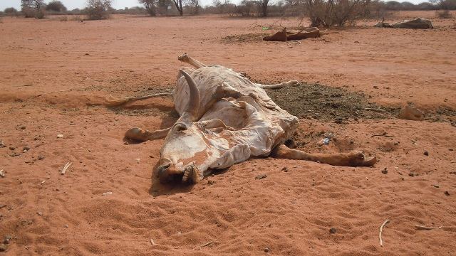 drought-in-the-horn-of-africa-photo-courtesy-of-islamic-relief-uk.jpg