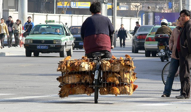 chickens-in-the-bus-shanghai-china-photo-by-gigi2.jpg