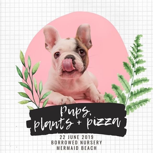 Join some of the Gold Coast's favourite doggie businesses at the Pups, Plants + Pizza pop-up on Saturday 22 June at the beautiful @theborrowednursery 🌱🐶🍕 Bring your pup, grab a delicious pizza, check out the pawsome plants and local businesses: @hugosicecreameryco @thedizzydogcollarco  @frankie_and_emmett @lovedogz_goldcoast @plutoandallytreatery @wilkopetcare + more to come! #pupsplantsandpizza . . . #hugosicecreamery #goldcoastevent #goldcoastdogs #gcdogs #dogsofthegc #dogevent #dogfriendlygoldcoast #popupgoldcoast #goldcoastpopup