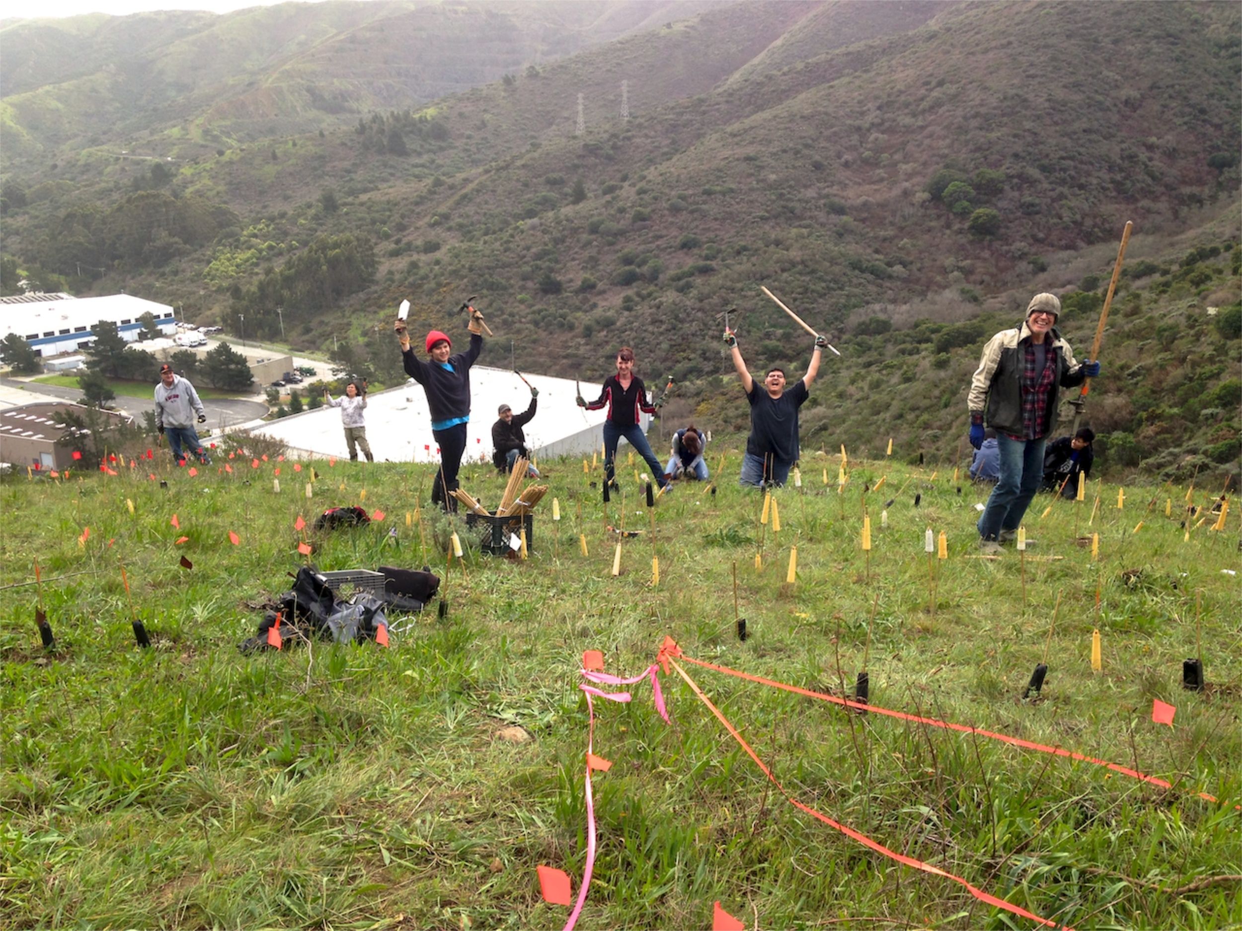 Volunteers restoring endangered butterfly habitat.