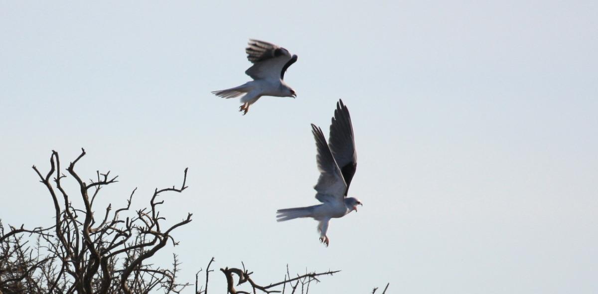 kites takeoff.jpg