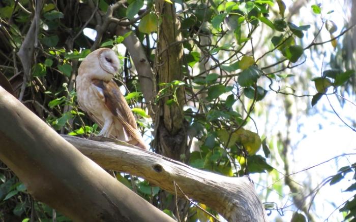 San Bruno Mountain   Wildlife