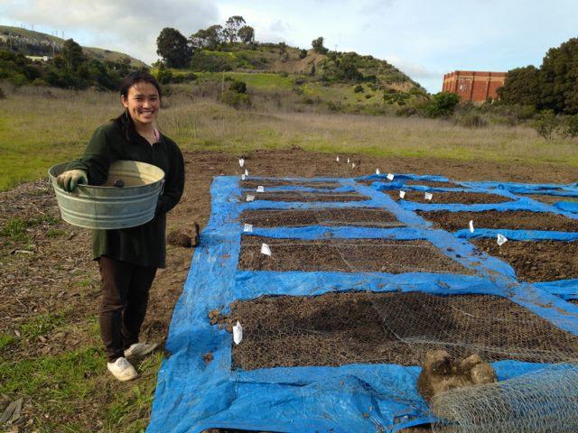 intern Tara Kai (2015) preparing annual beds for seeding