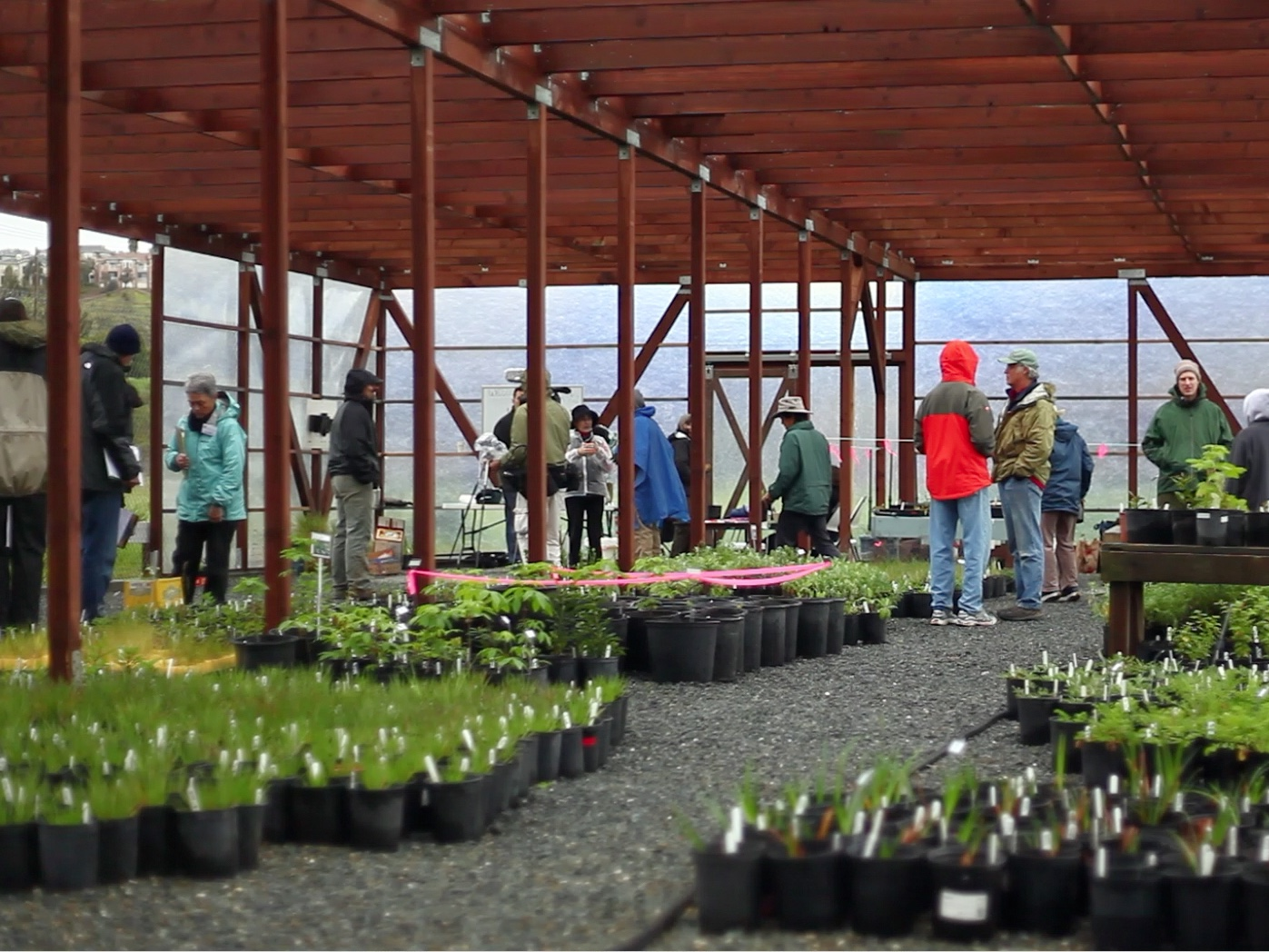 FIRST - native plant sale - March 2011
