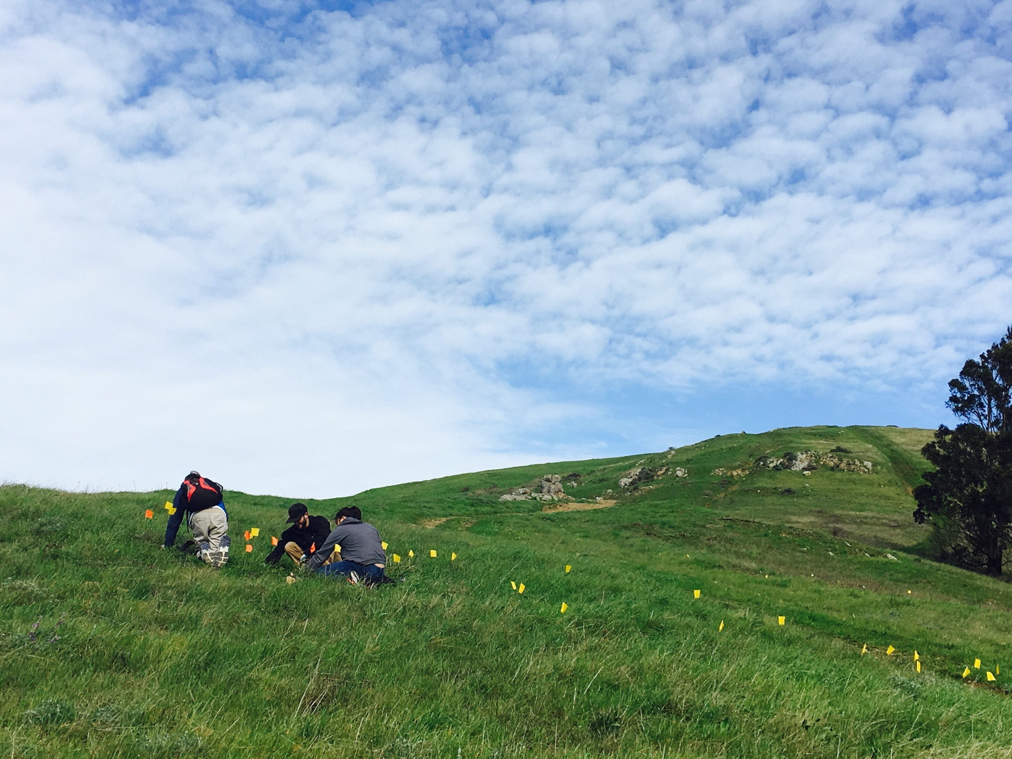 Volunteers planting nectar plants to nourish the Mission Blue and Callippe Silverspot butterflies.