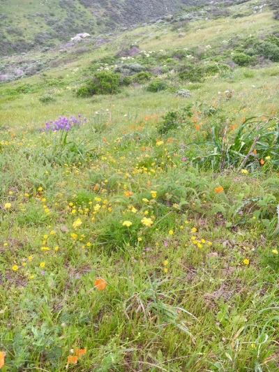 Blooming prairies vibrantly color the mountain's south side.