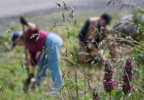 volunteers grooming our demonstration garden