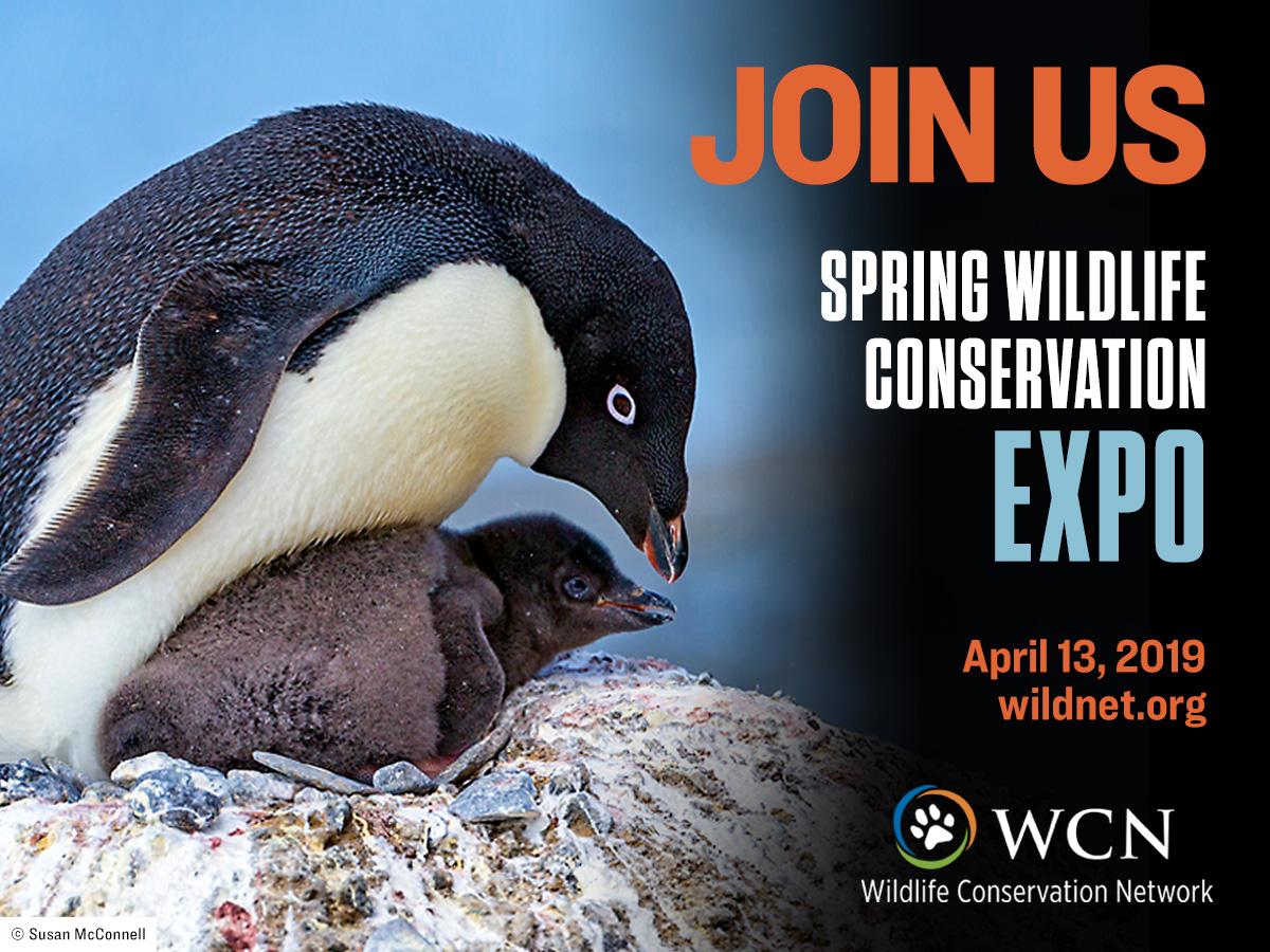 WCN_2019 Spring Expo.jpg