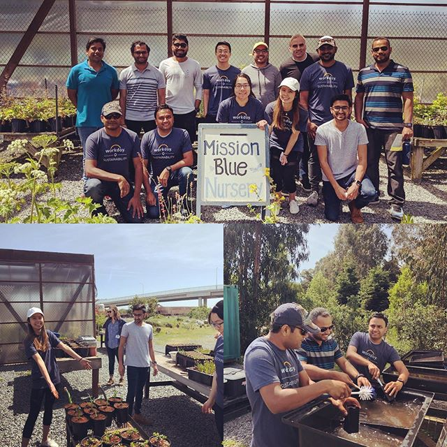 If you'd like to enjoy time with your colleagues outside the office, we'd love to host you at our lovely #nativeplantnursery ! Email nursery@mountainwatch.org for more information. Pictured here is a great group from @workday #communityservice #volunteering #corporateresponsibility #volunteerism