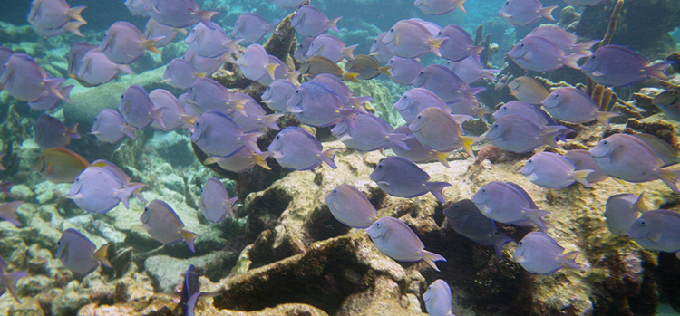 Photo:  Snorkelingdives.com