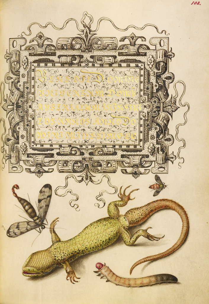 Joris Hoefnagel (Flemish / Hungarian, 1542 - 1600) Scorpionfly, Insect, Lizard, and Insect Larva, 1561 - 1562; The J. Paul Getty Museum, Los Angeles,  Ms. 20, fol. 108.