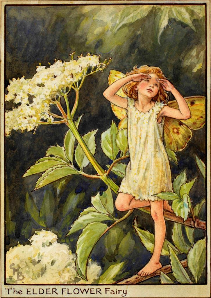 One of Cicely Mary Barker's illustrations of tree fairies.