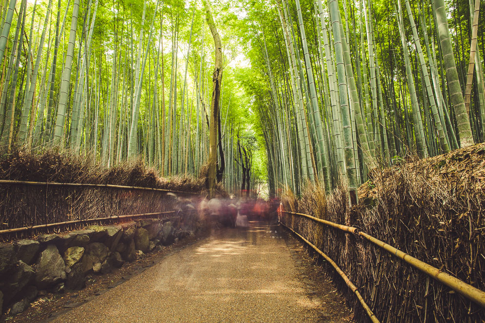 Bamboo Grove (1 of 1).jpg