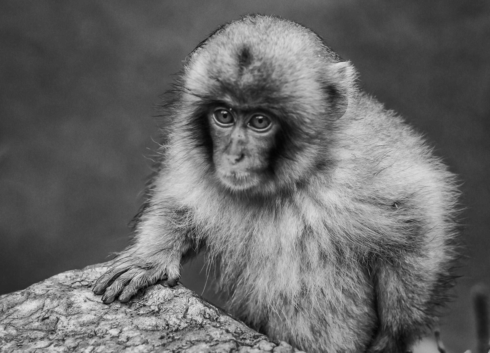Snow Monkeys (4 of 7).jpg