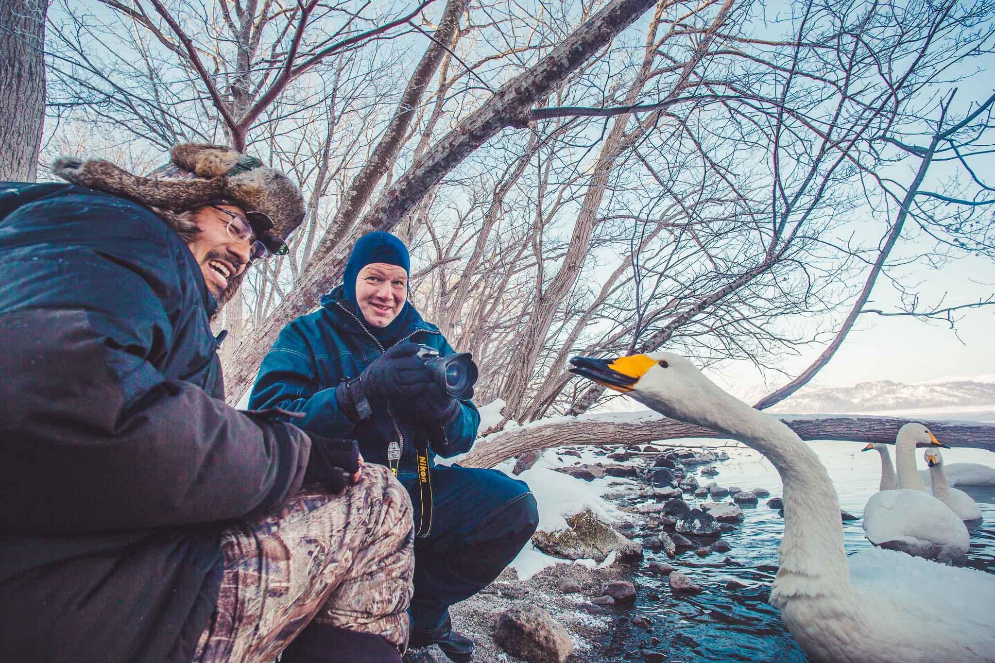 Whooper Swans by Lake Kusharo